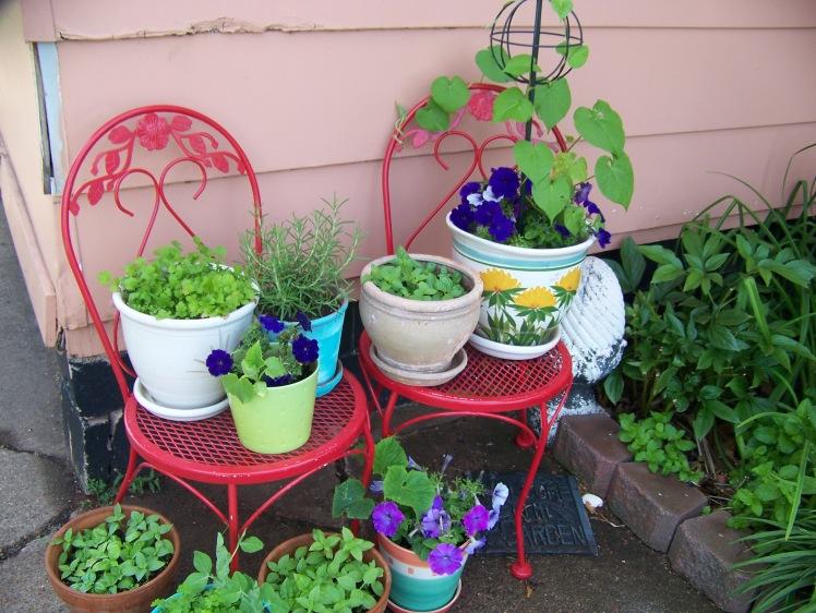 Amy's Summer Container Garden