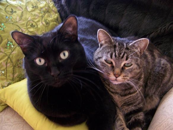 Athena and Pandora snuggling to keep warm