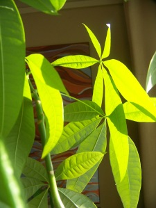 The sunlight filtered through the windows today and my houseplants were sponges as they soaked up the joyful rays.