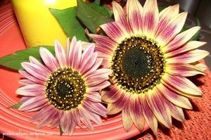 Sunflowers from my garden.