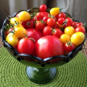 Yesterday I harvested tomatoes from my garden.
