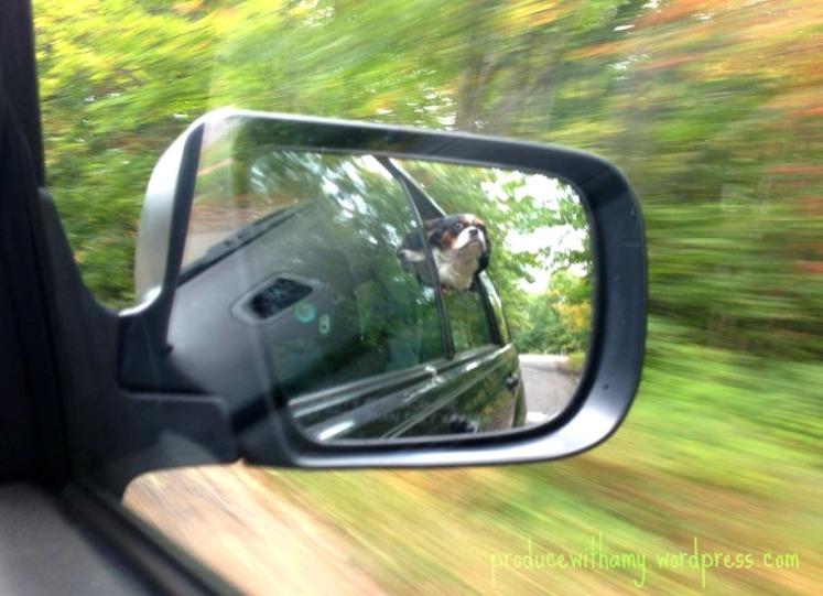 Phoebe enjoys a joyful afternoon drive.