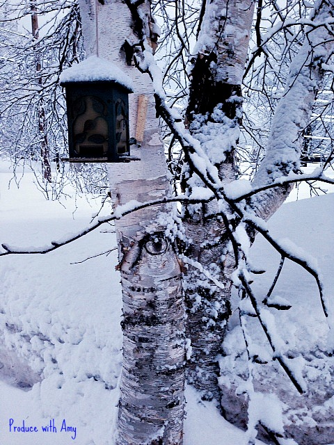 Birdfeeder and Birches