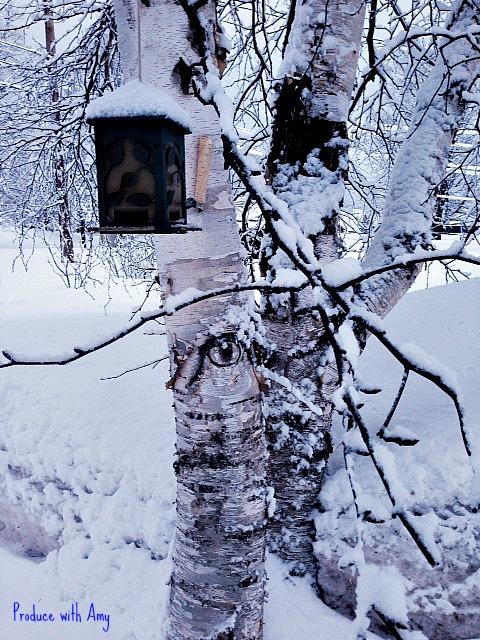 Birdfeeder and Birches