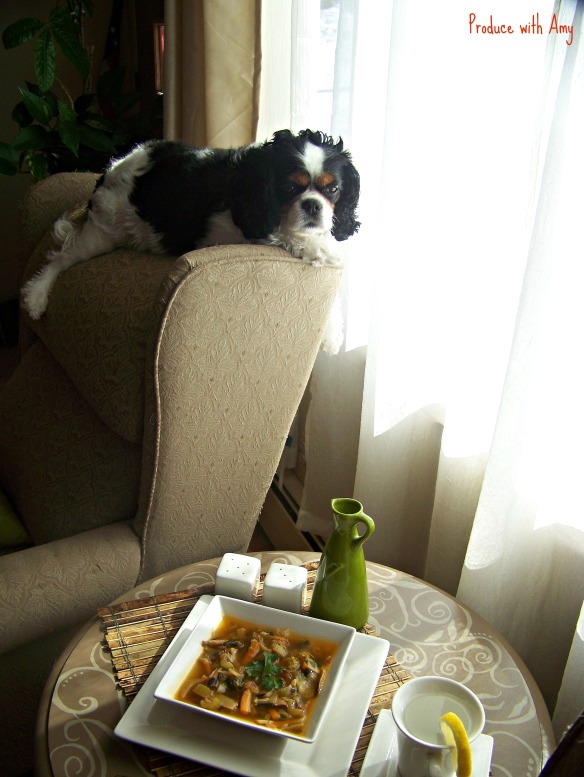 Our Cavalier King Charles Phoebe is my photo assistant.