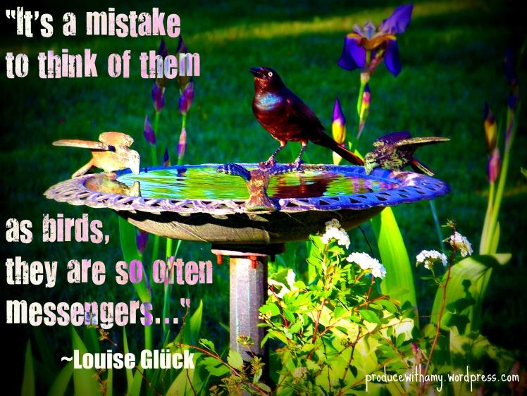 Birds are Messengers