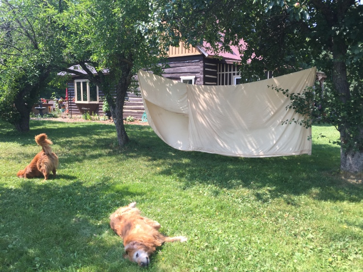 The best of summer: lazy dogs and sheets on the line.