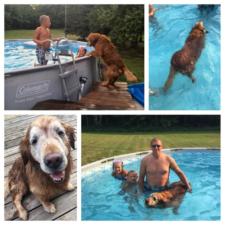 Our sweet old dog, Ollie decided a dip in the pool would be refreshing.