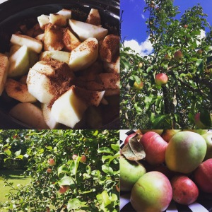 John and I have made several batches of homemade apple sauce this fall. We had an abundance of apples this year.