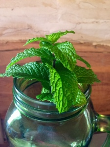 Fresh mint from our herb garden.