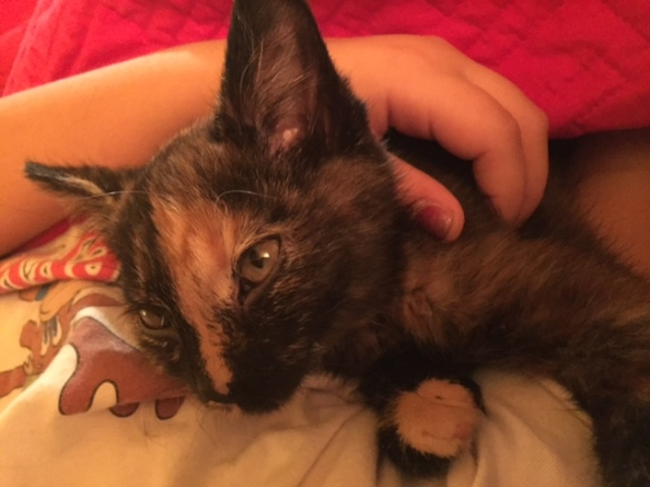My friend Kay shared a photo from UPAWS on Facebook of a sweet little tortie named Suzy Q. I fell in love with her and the next day my husband John adopted her for us. We named her Trixie (my favorite books as a little girl were the Trixie Belden series).