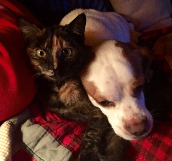 """Our kitten Trixie is getting big and Louie loves her so much. Not only do they snuggle together but he growls at the other dogs when they get """"too close"""" to her."""