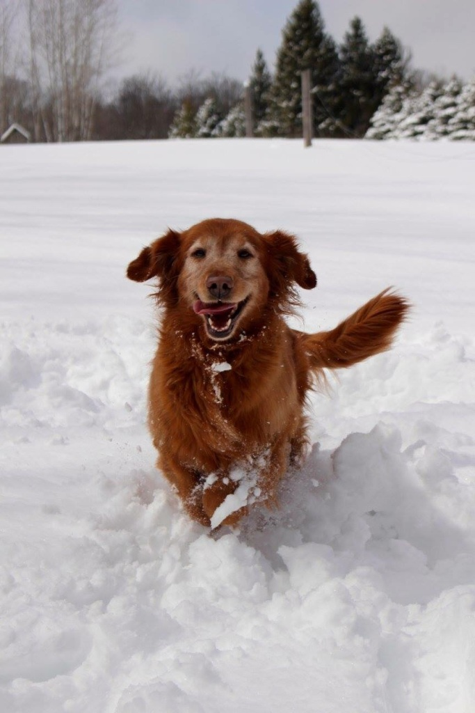Our sweet golden retriever Gracie does not let anything get her down. Look at that smile!