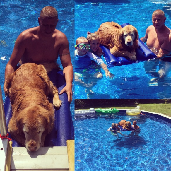 Our Golden Retriever Ollie even relaxed in the pool this summer.