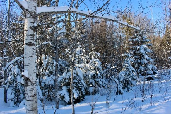It's a winter wonderland in our backyard.